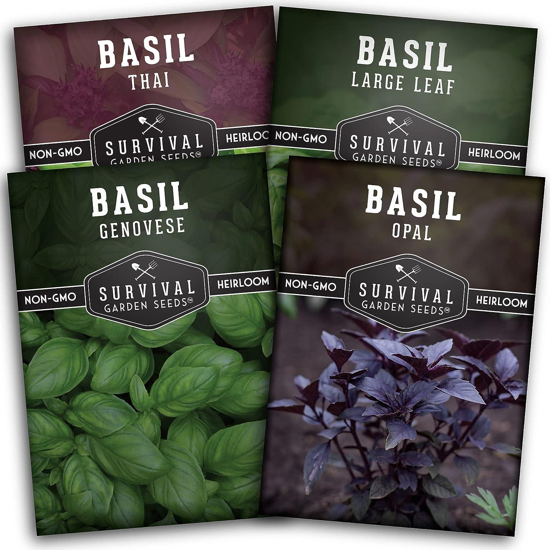 Survival Garden Seeds Basil Collection Seed Vault - Genovese Basil, Large Leaf Basil, Opal Basil, and Thai Basil - Non-GMO Heirloom Seeds for Planting