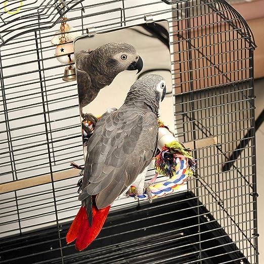 Colorday 9 Pulgadas de Acero Inoxidable Espejo de Aves con la Cuerda Perca p/ájaro Juguetes Swing Perca c/ómoda para Grays as Periquito Cockatiel Conure Lovebirds Finch canarias Grande