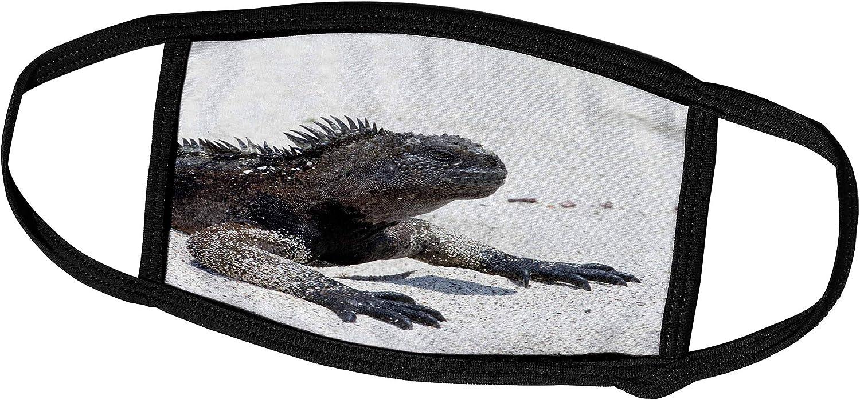 3dRose Danita Delimont - Galapagos Islands - Galapagos Marine Iguana, San Cristobal Island, Galapagos Islands - Face Masks (fm_250459_2)