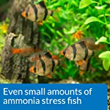 API AMMONIA 130-Test Freshwater and Saltwater