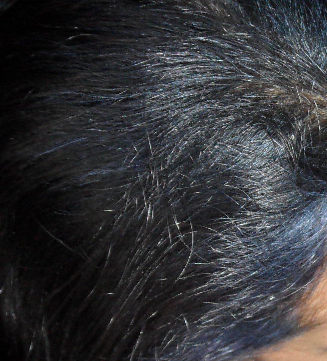 Pure Indigo Jet Black Tinte para el cabello, 200 g