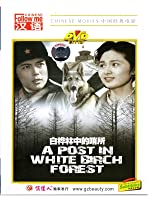 A Post In White Birch Forest (English Subtitled)