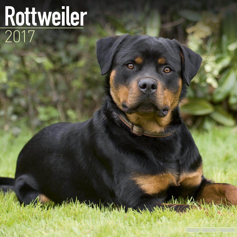 rottweiler-calendar-2017-square