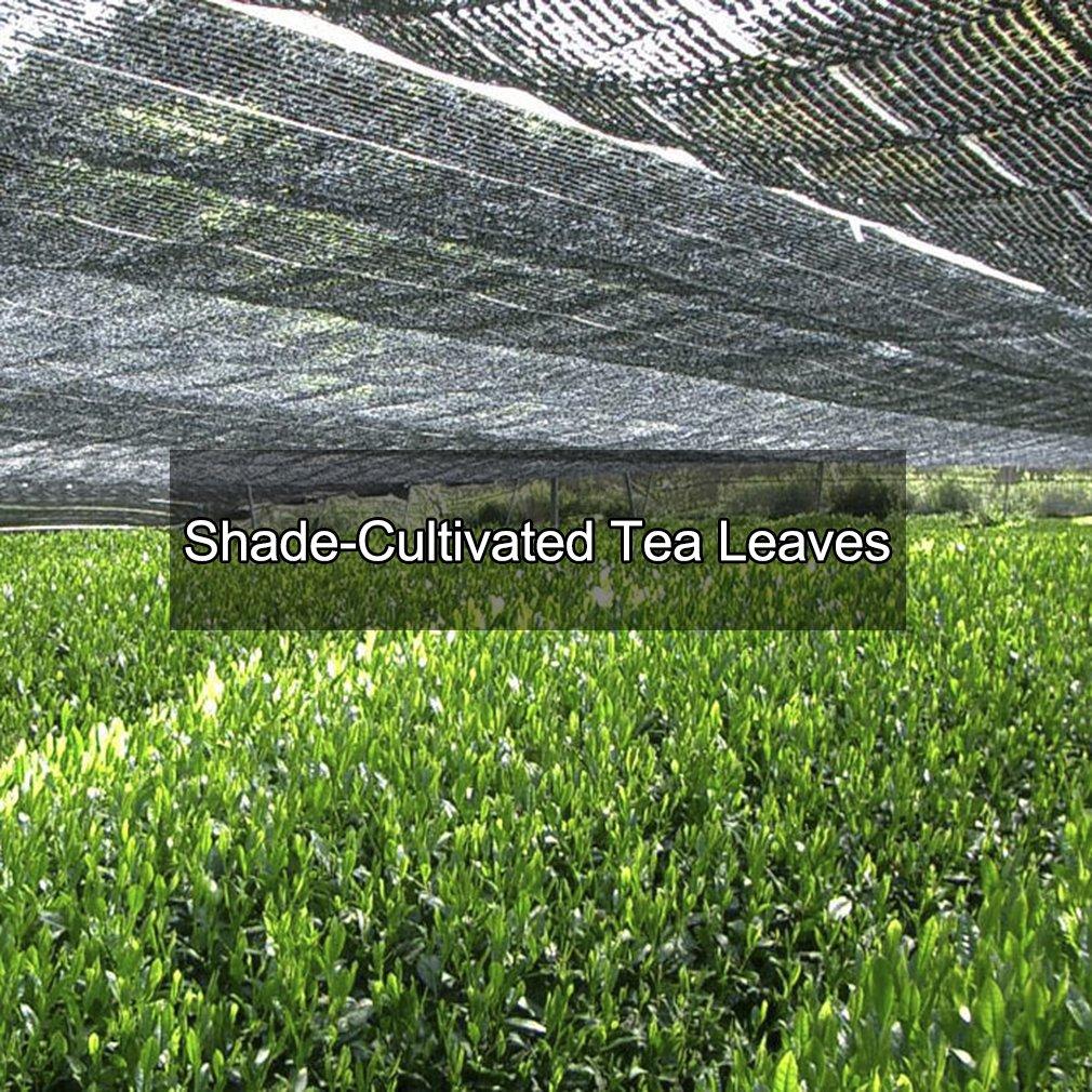 Tmatcha Japanese Matcha Green Tea Powder 5lb - USDA Organic - Culinary Grade Matcha Powder for Wholesale by Tmatcha (Image #7)