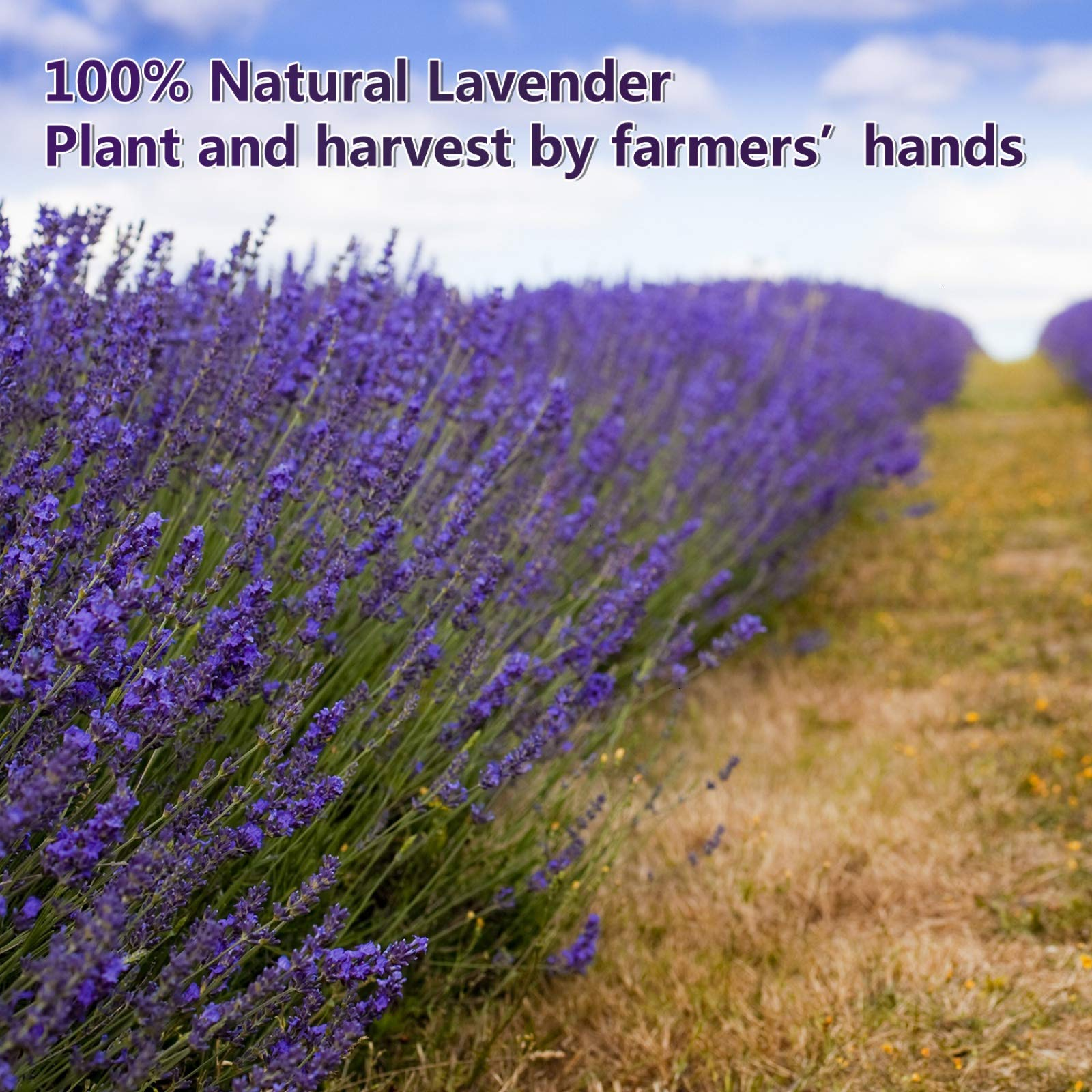 Timoo Dried Lavender Bundles 100% Natural DriedLavenderFlowers for Home Decoration, Photo Props, Home Fragrance, 2 Bundles Pack by Timoo (Image #7)