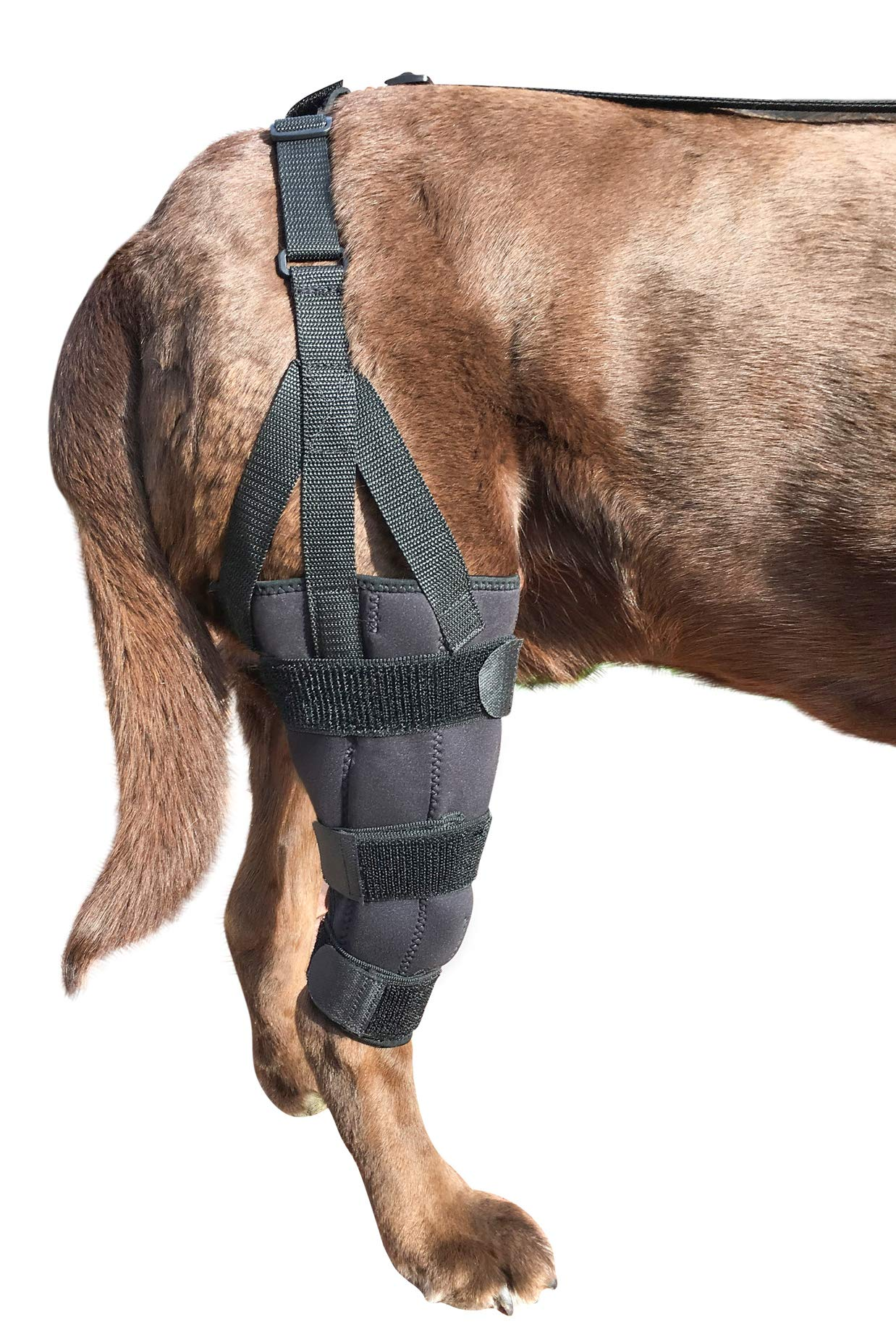 Labra Dog Canine K9 Knee Stifle Brace Wrap Metal Splint Hinged Flexible Support Treat ACL CCL Luxating Patella Cruciate Ligament Sprain Strain Tear Injuries by Labra
