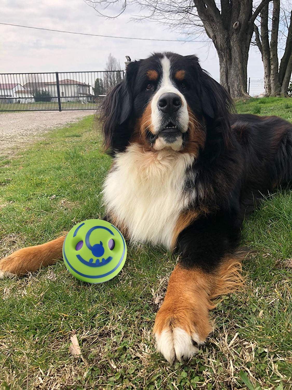Pelota de juguete GF para perro con sonido divertido que mantiene ...