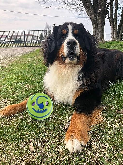 Pelota de juguete para perro, con sonido divertido, mantiene a los ...