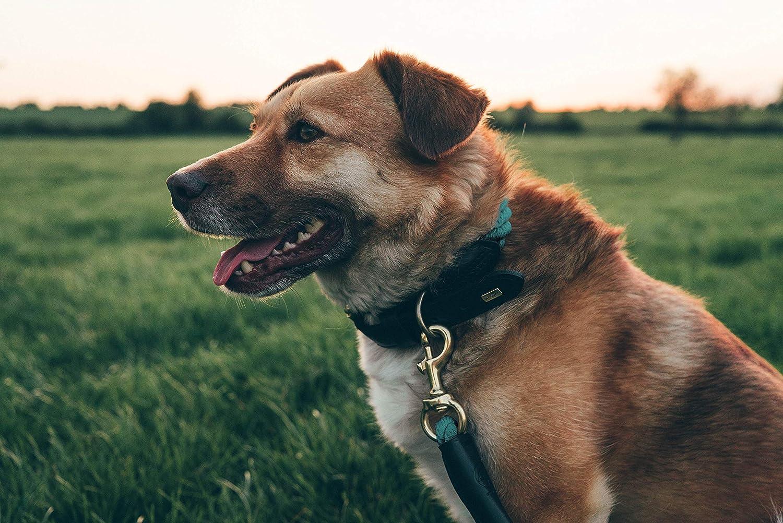 taglia S M Slight Small L e XL Embark Pets Collare in corda per cani in cotone intrecciato e finitura in pelle