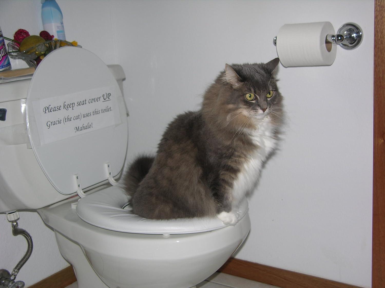 Mejores kits de entrenamiento para el uso del inodoro para gatos de 2020 2