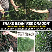 Snake Bean Red Dragon 10 Seeds Heirloom Climbing Asian Vegetable Long Beans