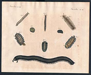 Grafik Wurm Würmer worms Tausendfuss animal engraving Kupferstich ...
