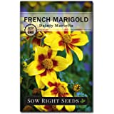 Sow Right Seeds - Dainty Marietta Marigold Seeds for Planting, Beautiful to Plant in Your Flower Garden; Non-GMO…