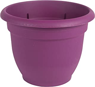 "product image for Bloem AP1029 Ariana Self Watering Planter, 10"", Violet"