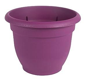 Bloem AP0629 Ariana Self Watering Planter, 1,Passion Fruit