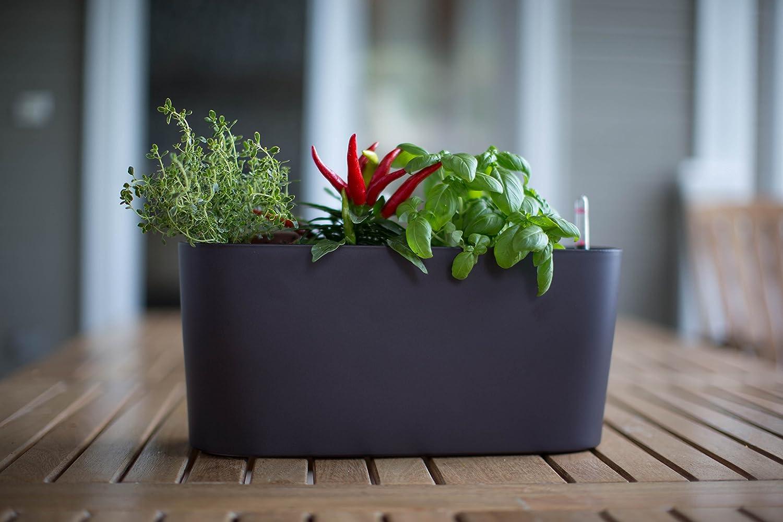 amazon com algreen 15105 self watering modena windowsill planter