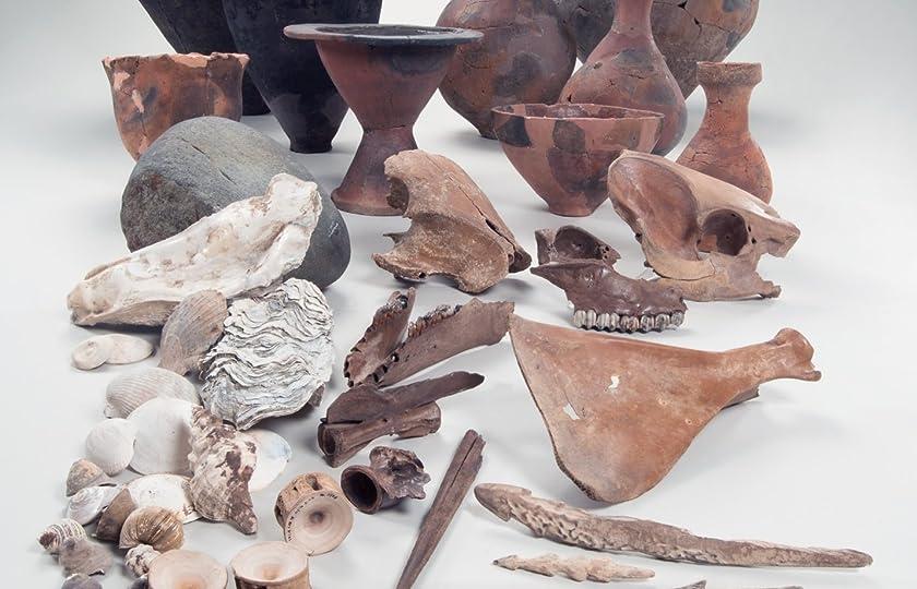 弥生時代食の多角的研究:池子遺跡を科学する