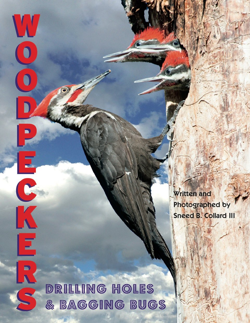 Download Woodpeckers: Drilling Holes & Bagging Bugs PDF