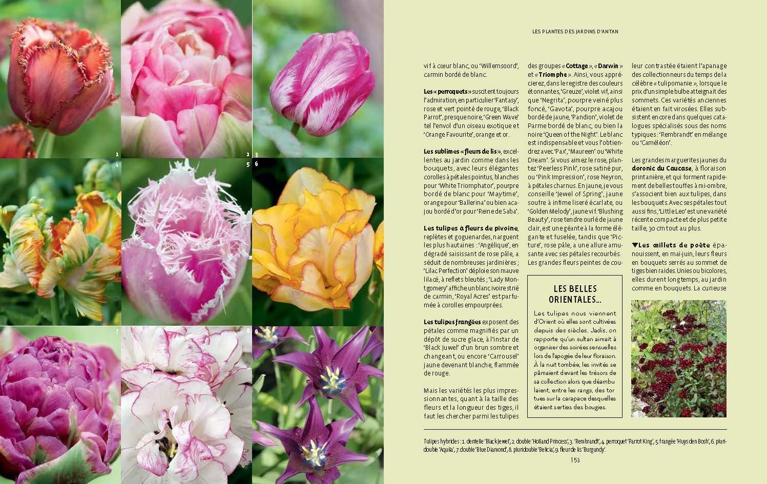 Jardins De Cure Jardins D Antan Philippe Ferret Claudie Mangold