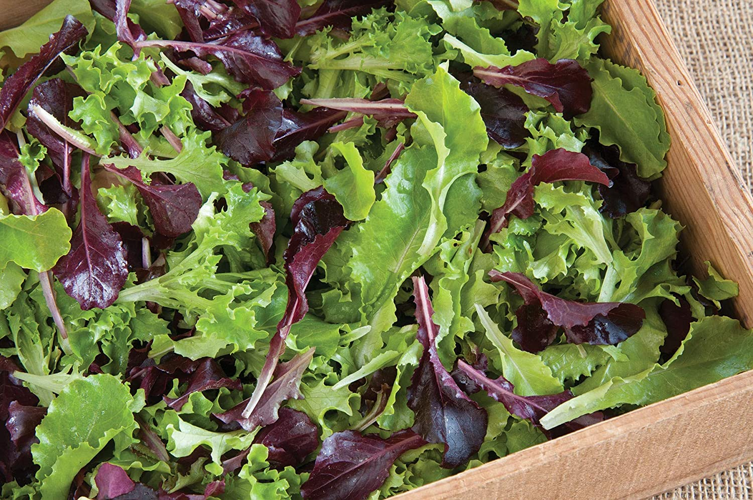 David's Garden Seeds Lettuce Mix Five Star Greenhouse 1934 (Multi) 200 Non-GMO, Open Pollinated Seeds