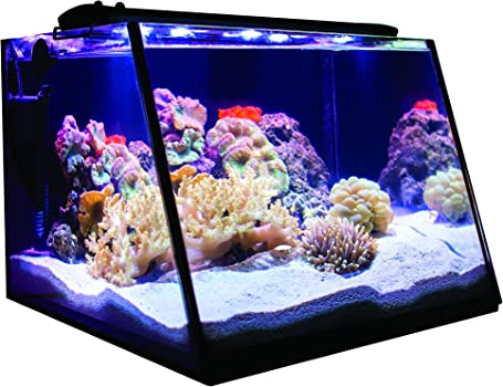 Lifegard Aquatics 7-Gallon Nano Reef Tank