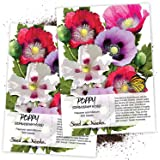 Seed Needs, Single Mixed Poppy (Papaver Somniferum) Twin Pack of 500 Seeds Each