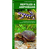 Reptiles & Amphibians: A Folding Pocket Guide to Familiar North American Species (Wildlife and Nature Identification)