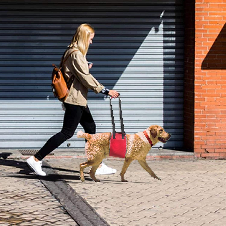 XL, Rojo Soporte para Perros Reflectante Port/átil Arn/és Perro de Rehabilitaci/ón Plegable con Correa de Mano Ajustable y Asa Acolchada para Perros con Piernas Traseras D/ébiles
