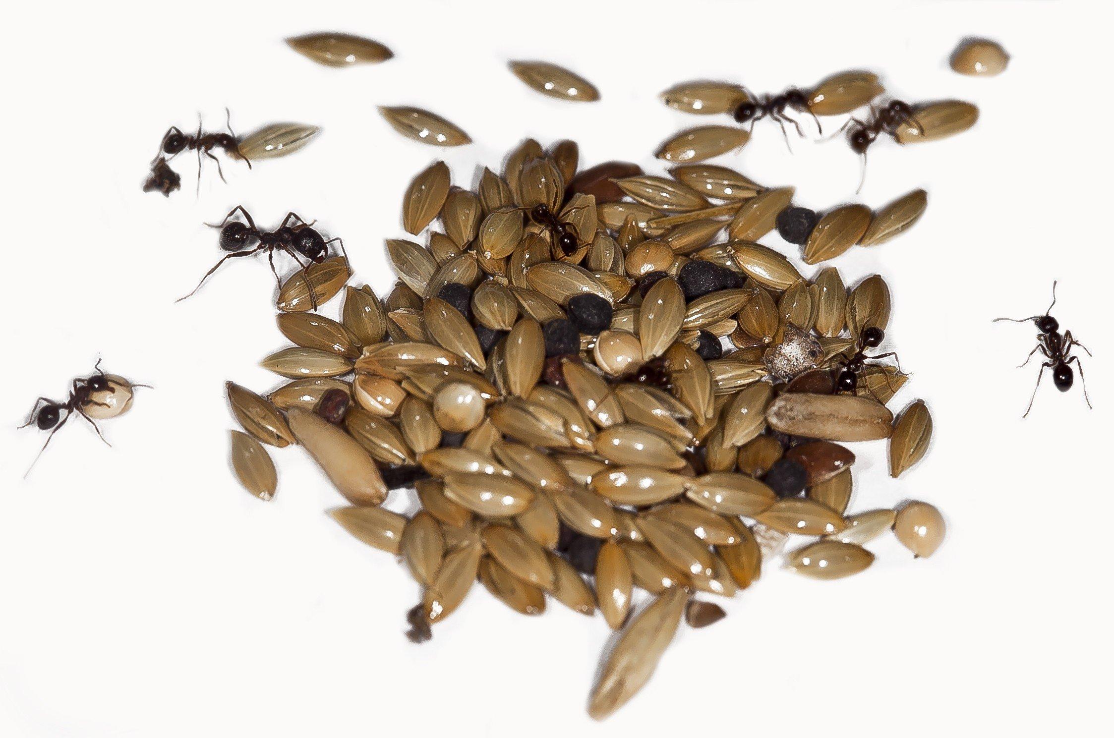 Mega Trough FOR ANTS Food station