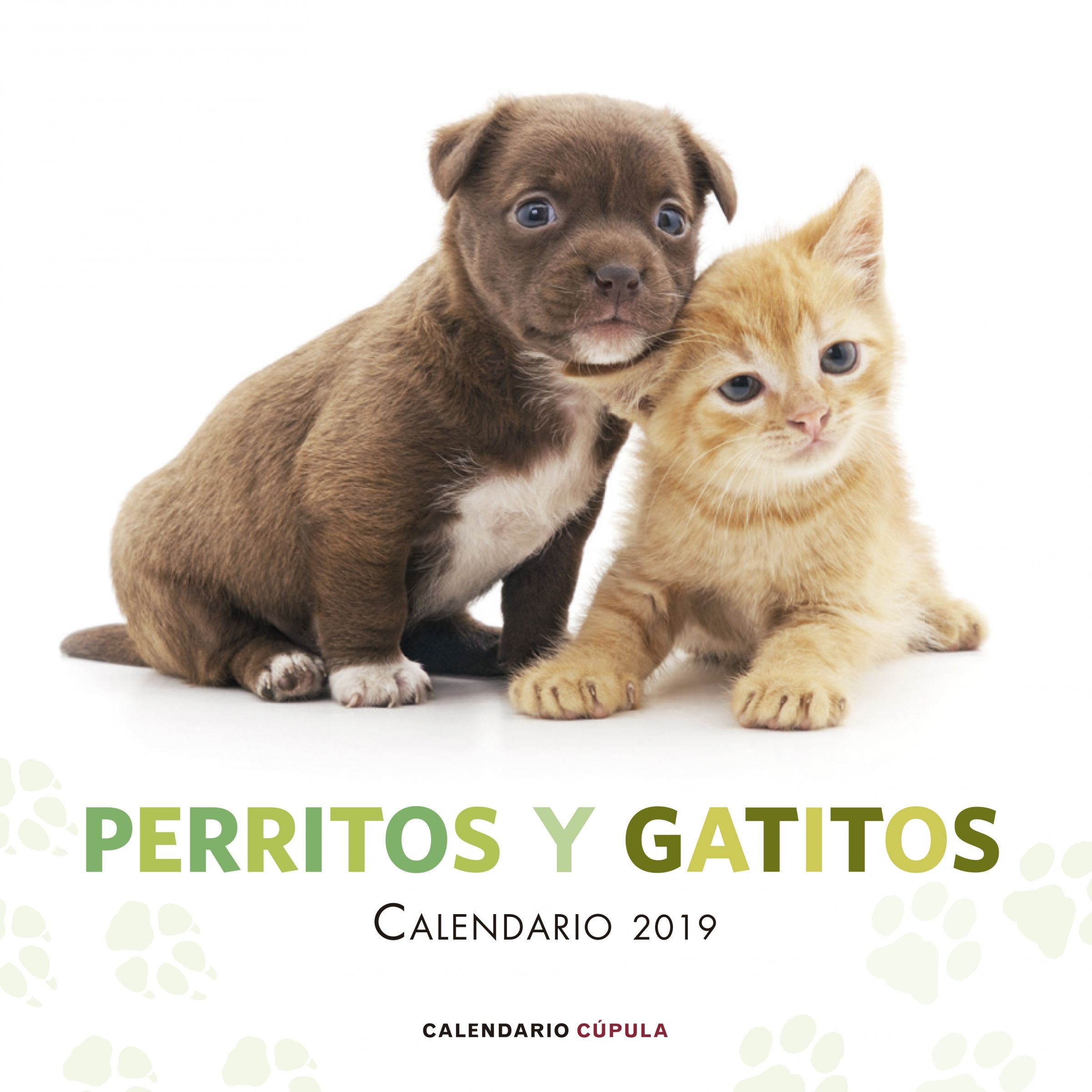 Calendario Perritos y gatitos 2019 Calendarios y agendas: Amazon ...