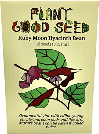 Green Organic Hyacinth Bean 10 seed Ruby Moon Seeds Non-GMO Heirloom