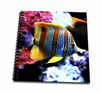 Amazon.com: Sven Herkenrath Sealife - Exotic Colorful Fish in the ...