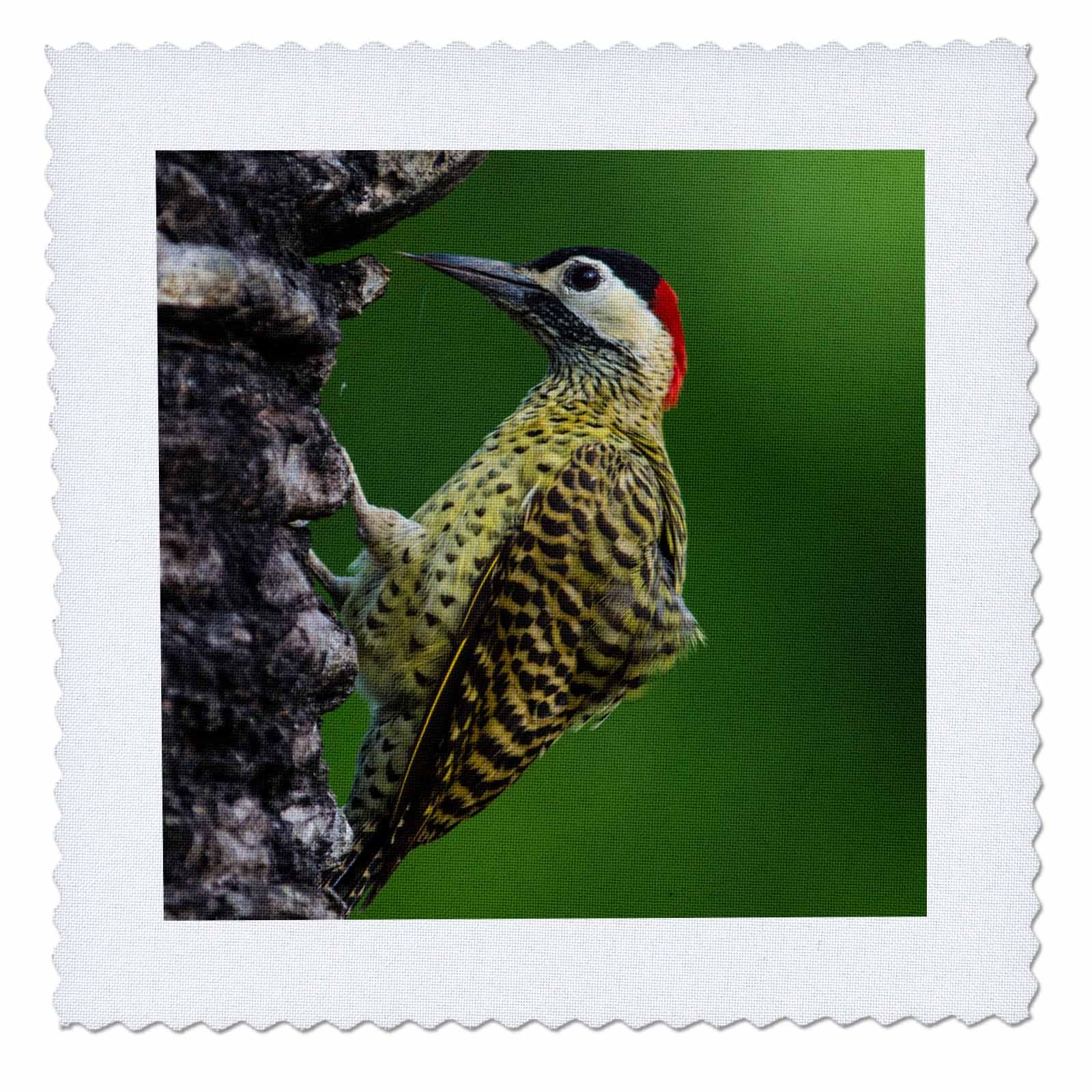 3dRose Danita Delimont - Birds - Brazil. A green barred woodpecker in the Pantanal - 22x22 inch quilt square (qs_278228_9)