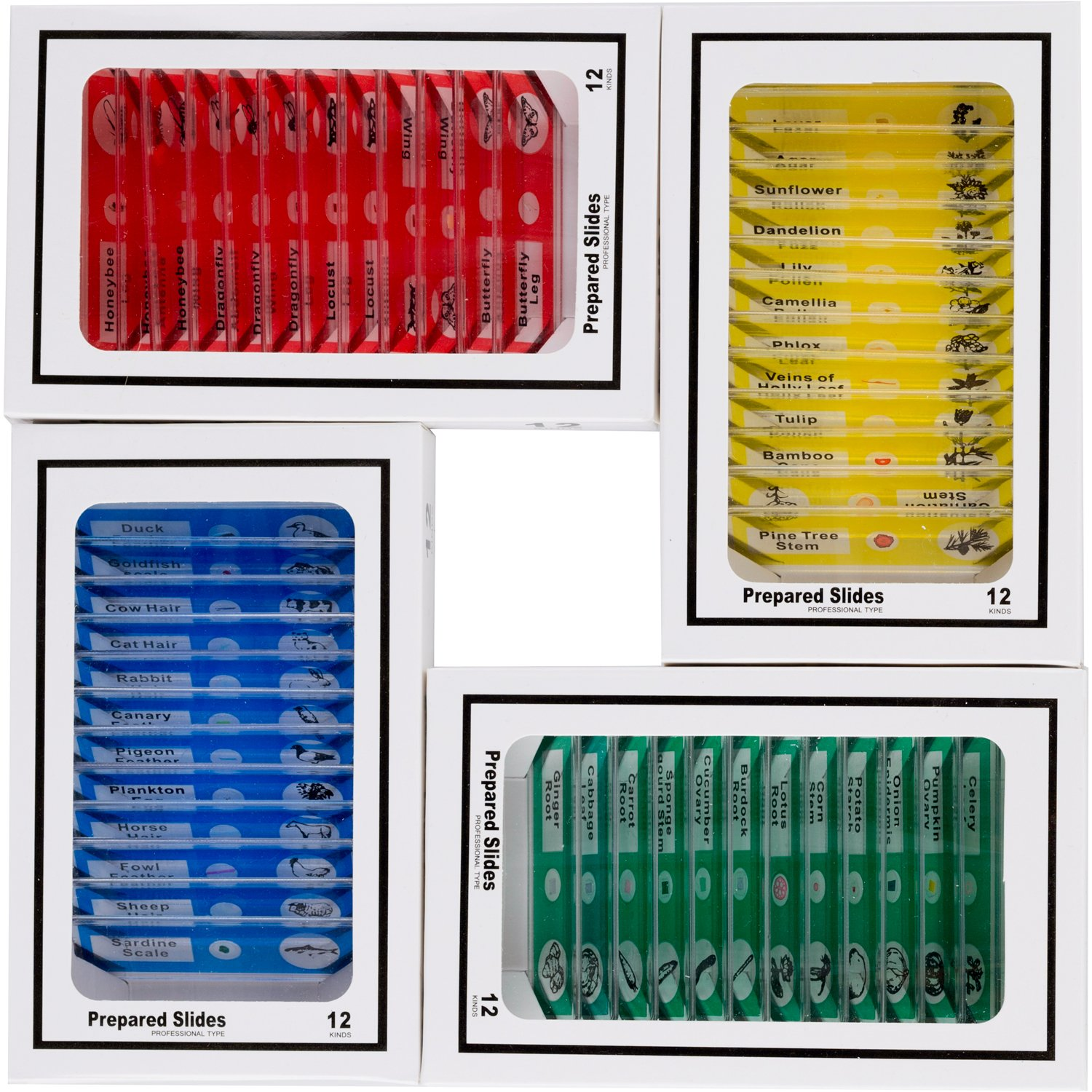 AmScope 48pcs Kids Plastic Prepared Microscope Slides of Animals Insects Plants Flowers Sample Specimens for Stereo Microscopes