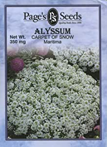 Page's Seed P704 Alyssum, Carpet of Snow Seed Packet