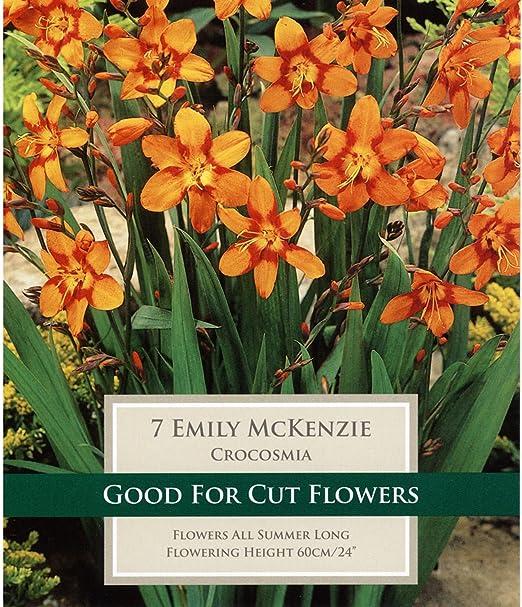 Crocosmia Emily McKenzie Orange and Red Pack of 25 Corms