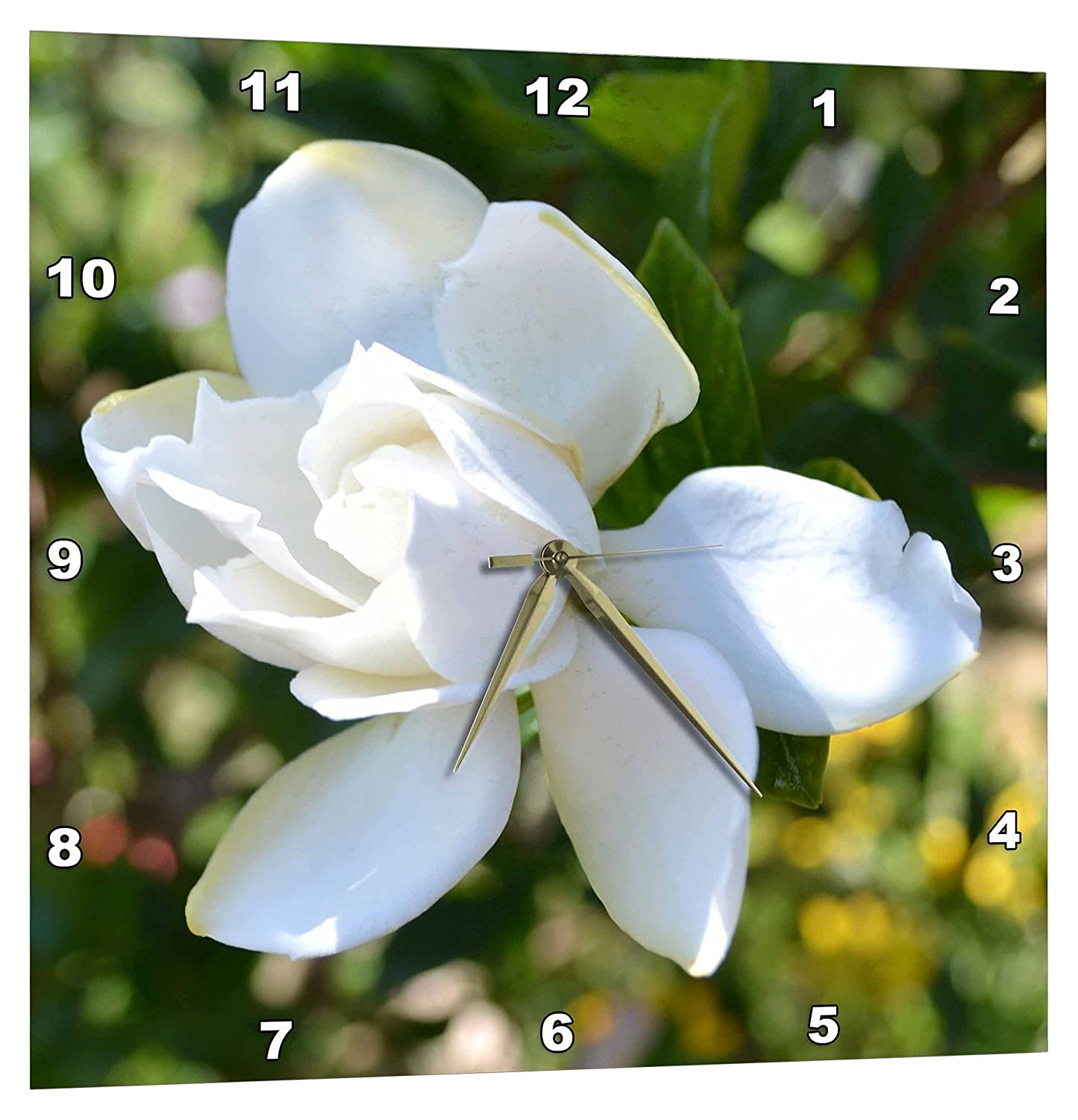 DPP/_25626/_3 3dRose Natures Expression of A Gardenia 15 by 15-Inch Wall Clock
