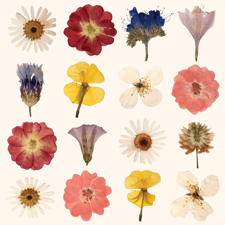 CasaJame Ensemble de 40 2 Paquets de 20 pi/èces chacun Serviettes en Papier Jetables 3 Couches Voiles 33x33cm Multicolore Motif L/Étude des Fleurs