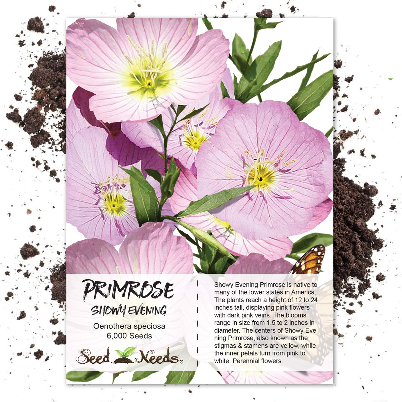 Amazon Seed Needs Showy Evening Primrose Oenothera Speciosa