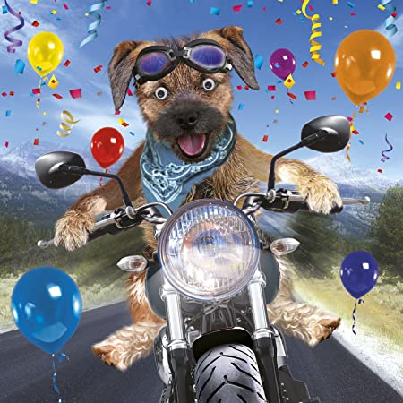 Border Terrier On Motorbike Birthday Card 3d Goggly Moving Eyes