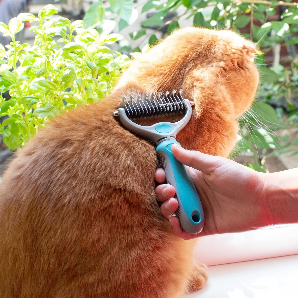 cepillo perritos