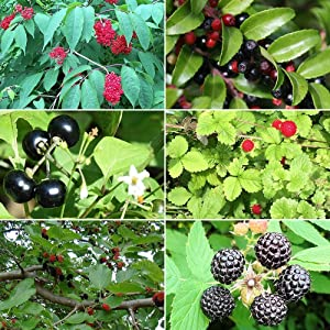 Berry Garden Seed Collection #1 - A 6 Variety Pack of Rare and Medicinal Berry Seeds! FROZEN SEED CAPSULES - The Very Best in Long-Term Seed Storage - Plant Seeds Now or Save Seeds for Years