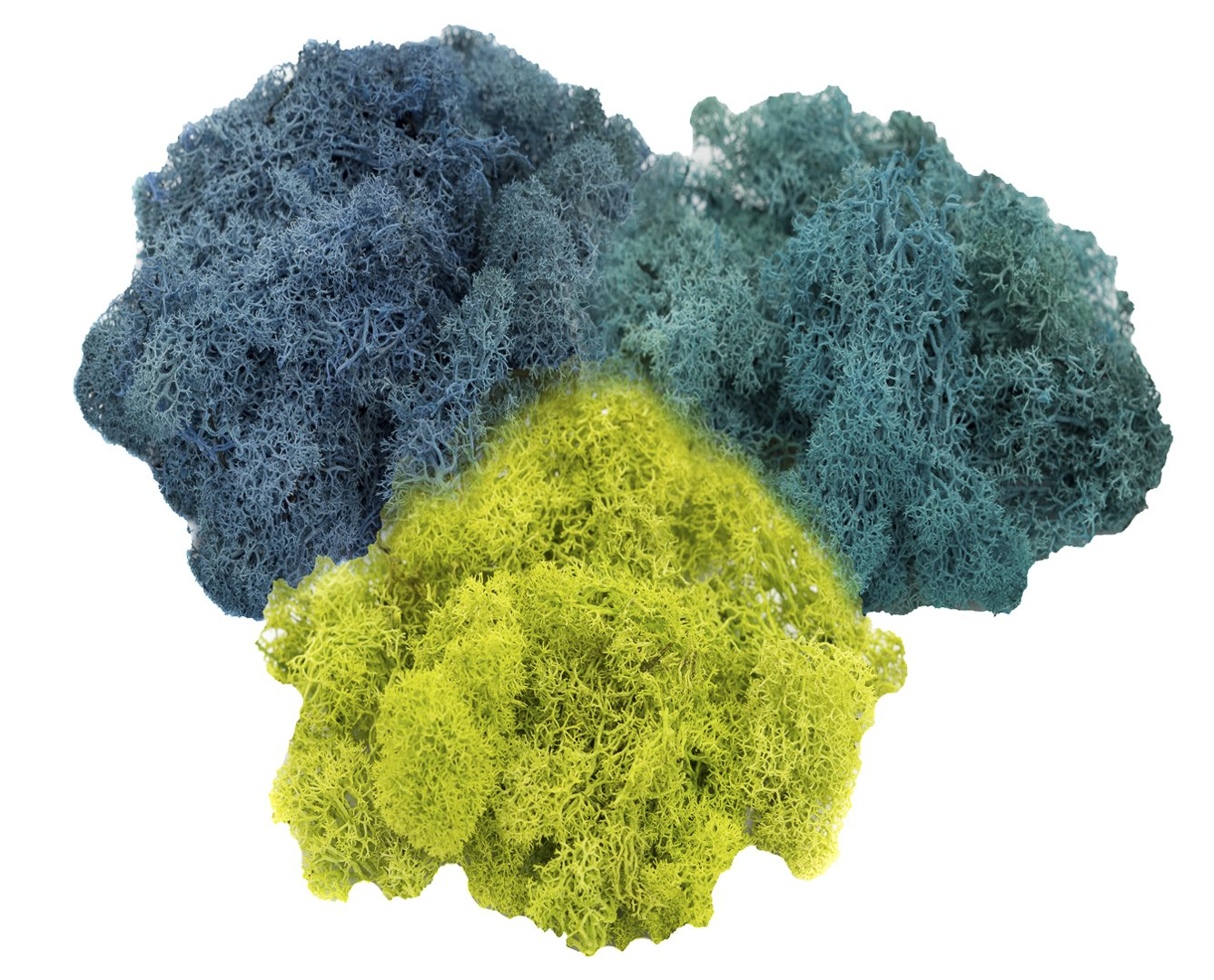Reindeer Moss Preserved | Tri-Color Moss Assortment | Aqua, Lime Green, Turquoise Moss - 3oz | For Fairy Gardens, Terrariums, or any Craft or Floral Project | Nautical Crush Trading TM