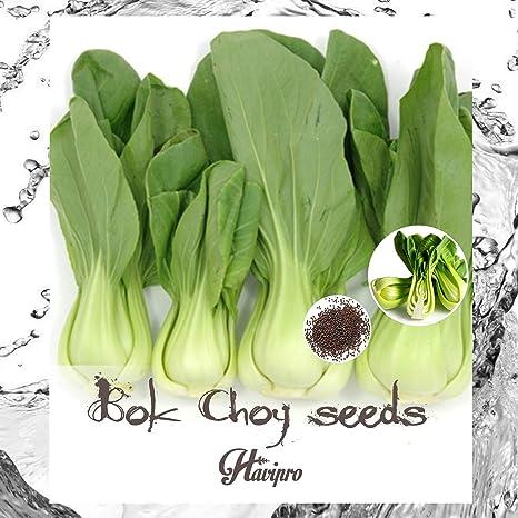 Organic  PAK CHOI Bok Choy Seeds Heirloom Non GMO Bok Choi 1000 Seeds
