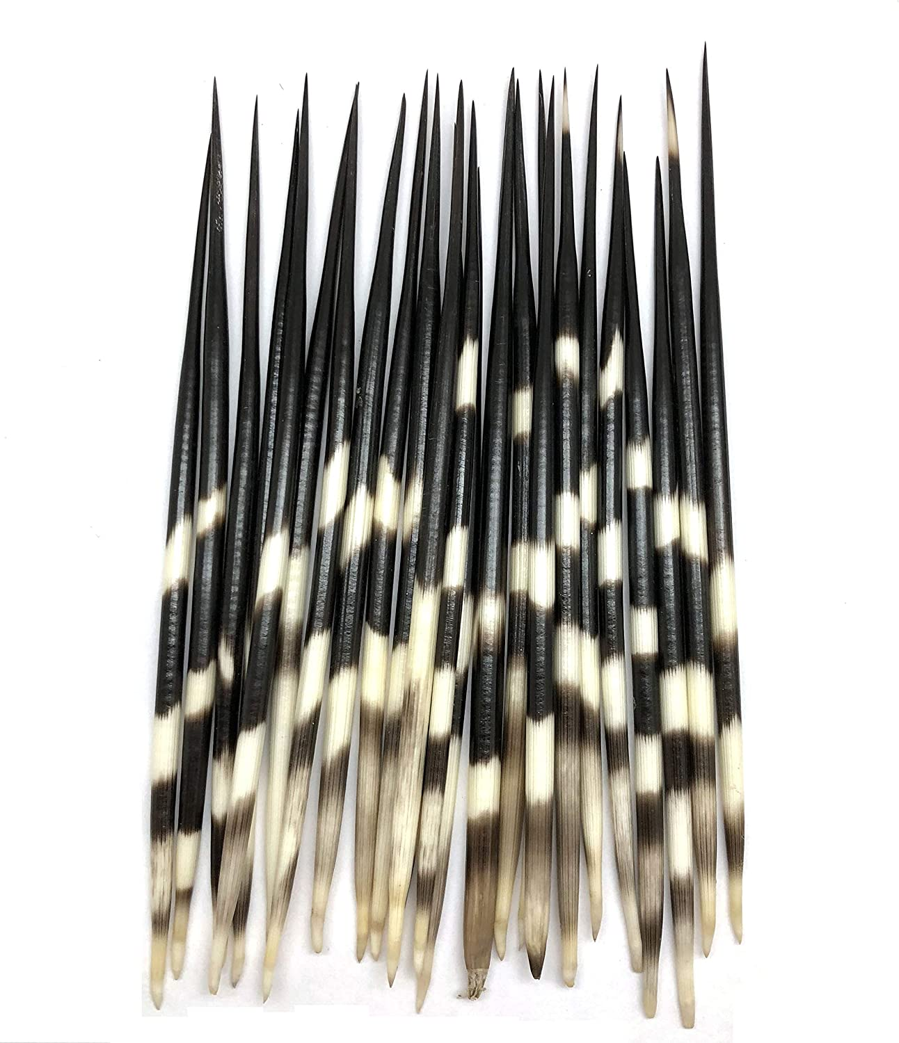 4 Inch ~ 6 Inch PEPPERLONELY 10PC South Africa Porcupine Quills