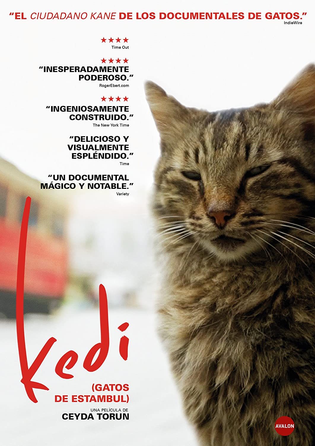 Kedi (Gatos de Estambul) [DVD]: Amazon.es: Documental, Ceyda ...