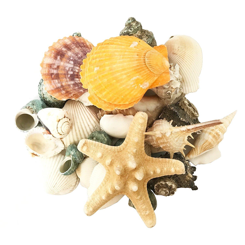 Perfectmaze Flat Clear Marbles, Pebbles for Vase Filler, Table Scatter, Aquarium Decor, Gravel Accents (12 Ounce, Seashells)