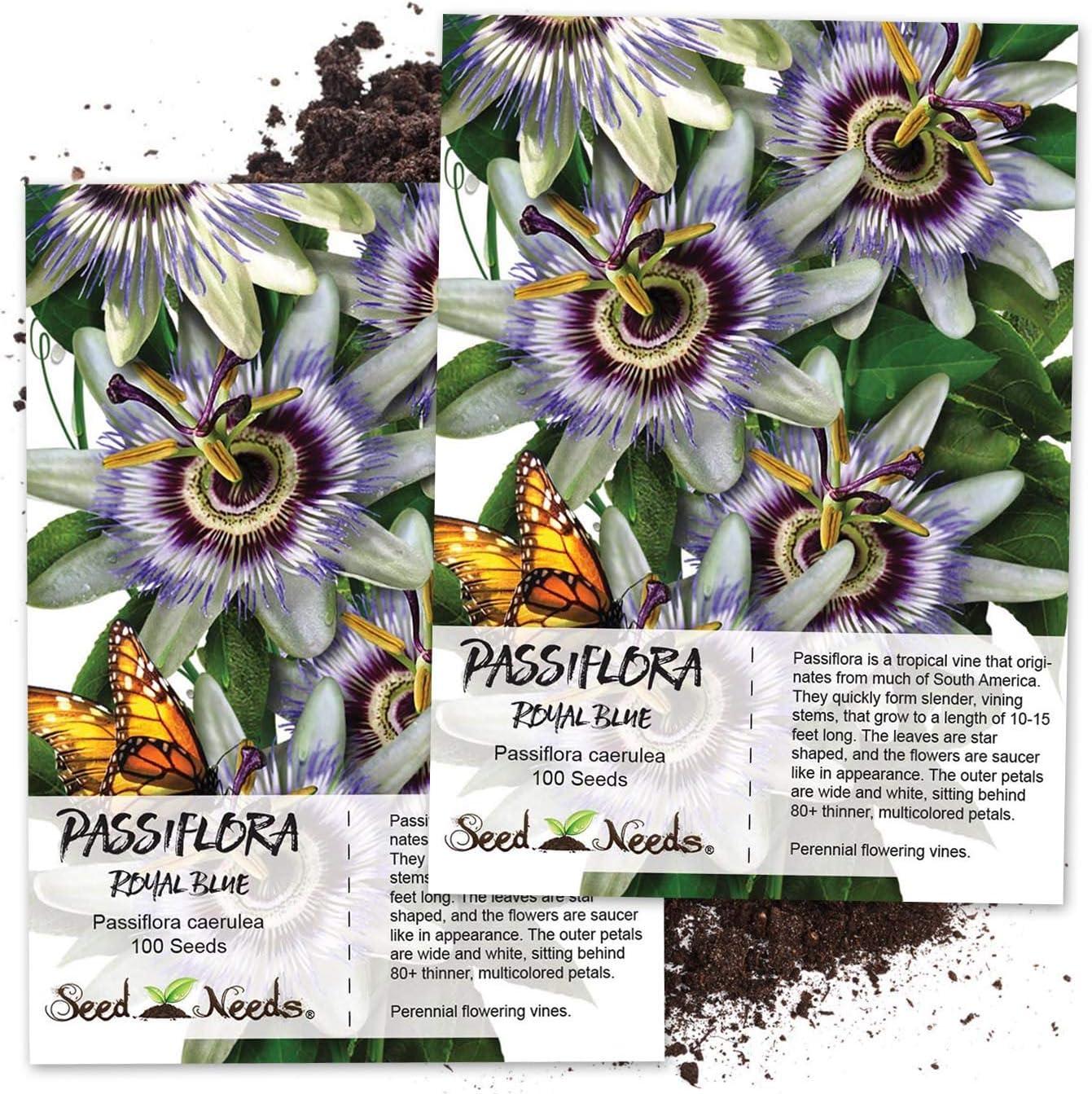 Amazon Com Seed Needs Blue Passion Flower Passiflora Caerulea