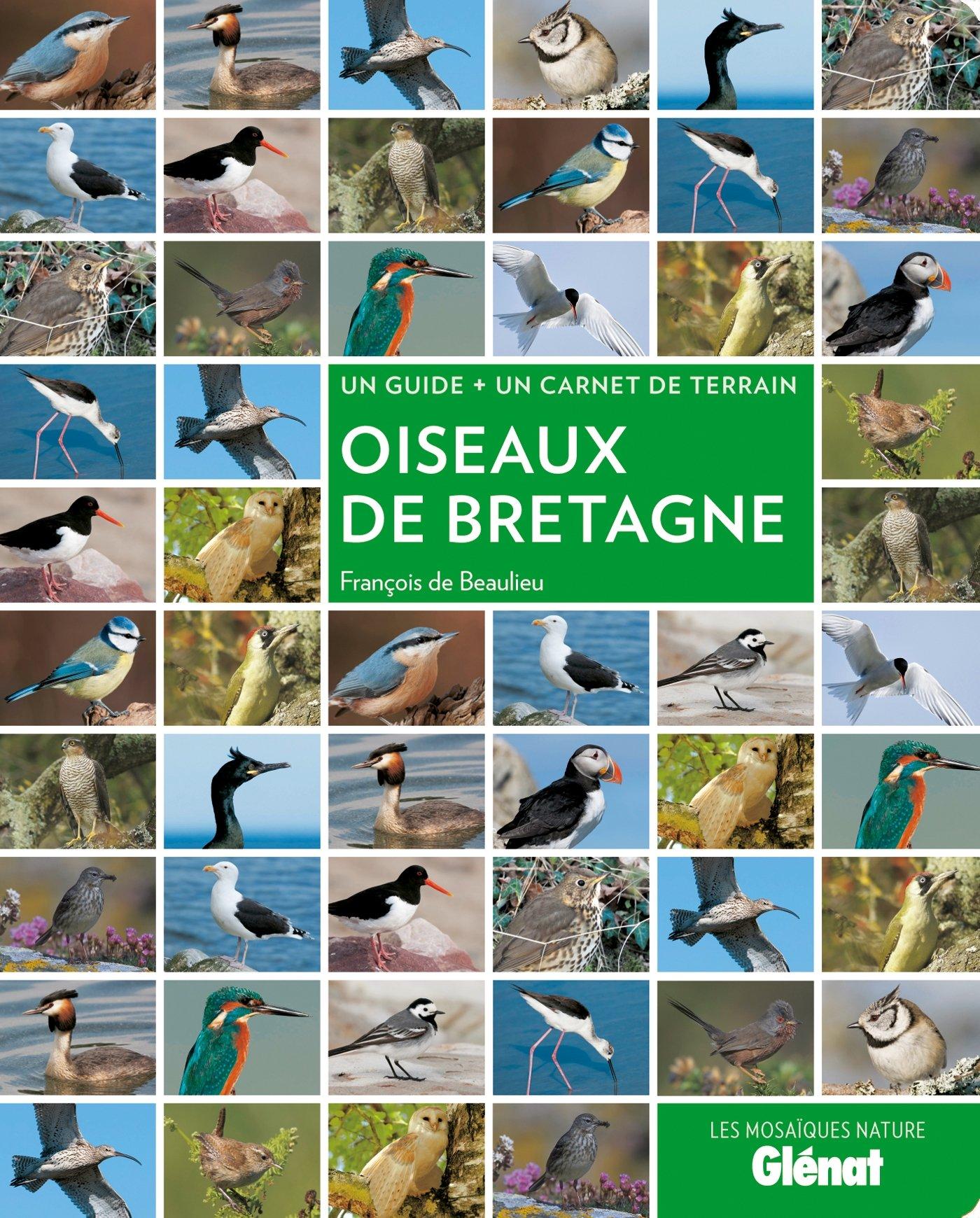 Oiseaux De Bretagne Ɯ¬ ɀšè²© Amazon