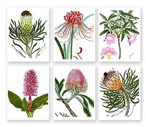 Exotic Bold Summer Flowers Art Prints Set of 6 Unframed Botanical Illustration Wall Art Prints